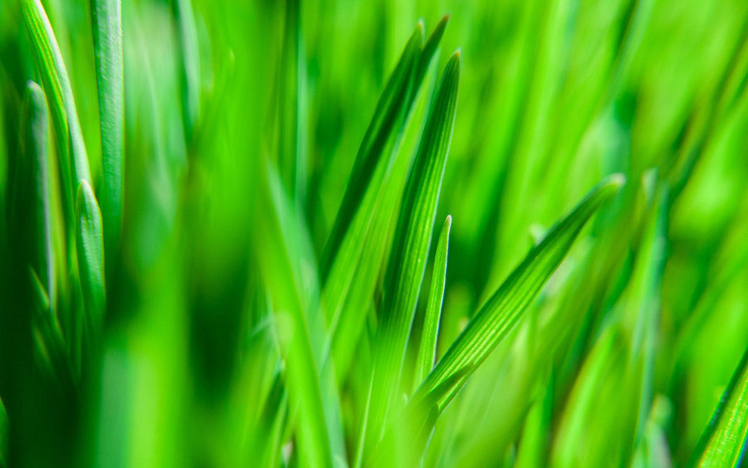 Synthetic Turf vs Natural Grass Fields